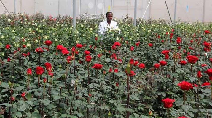 Ферма, которая намерена удвоить производство цветов к 2020 - 1