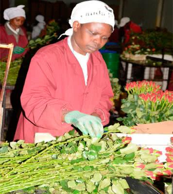 Ферма, которая намерена удвоить производство цветов к 2020 - 2