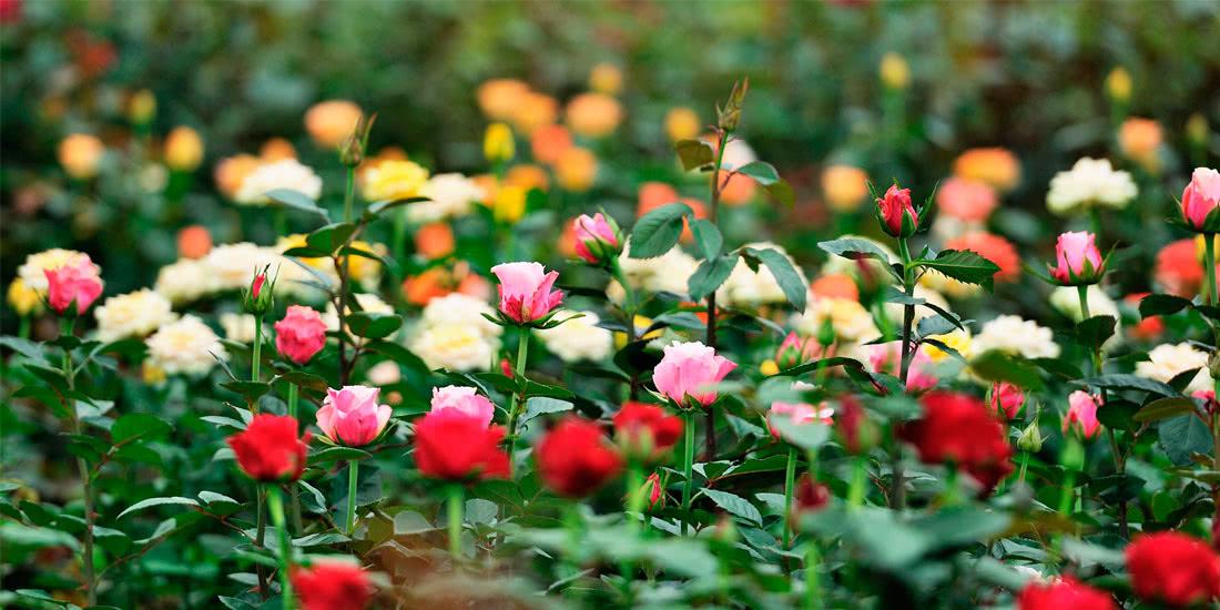 Экскурсии в цветоводческие хозяйства