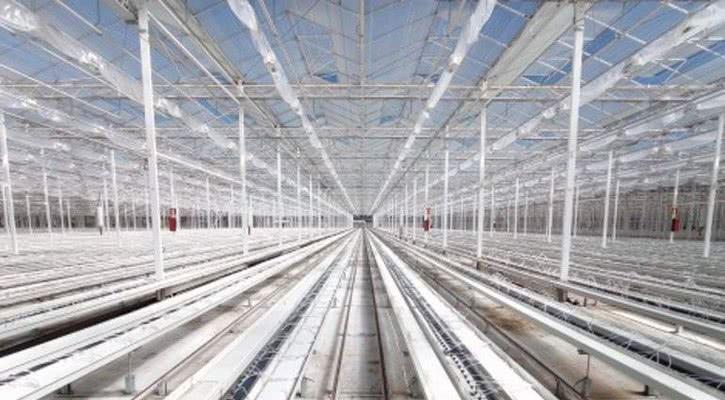 Крупнейшая в Европе теплица красных роз начнет выращивать лекарственный каннабис