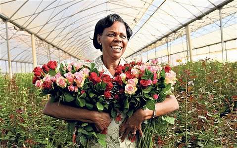 Кто самый крупный заказчик Кенийских цветов? - 1