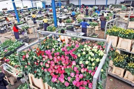 Налоговые препятствия на пути развития флористического бизнеса в Кении