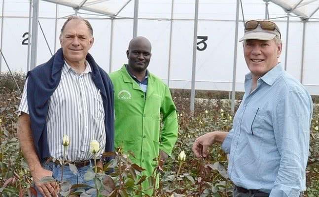 Пример удачного бизнеса по выращиванию роз: что важно для успеха