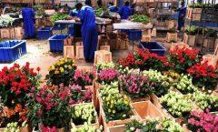 Почему Кенийские розы экономически эффективны?