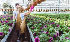 Растущий спрос на квалифицированных садоводов