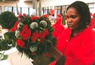 Стабилизированные букеты из Кенийских роз - 2