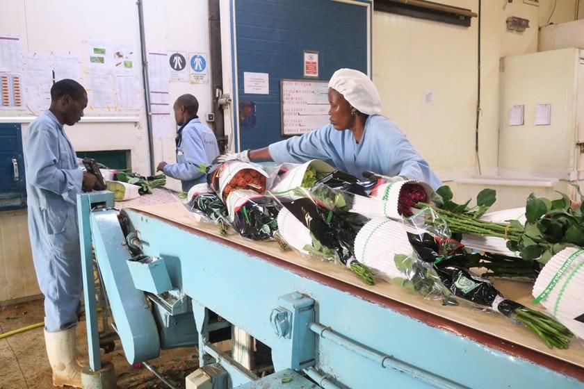 Африканские цветы покоряют китайский рынок 1