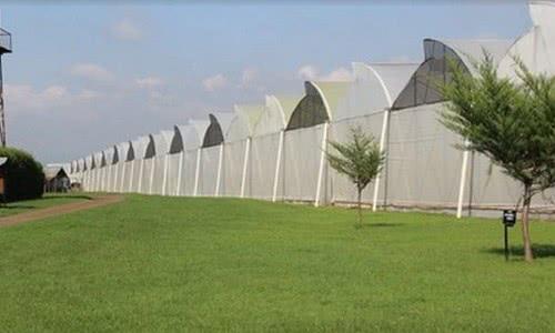 Кенийские производители цветов переходят на солнечную энергию